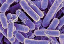 Photo of اكتشاف لقاح جديد قد يمنع الإصابة بالبكتيريا التي تسبب الإلتهابات الجلدية